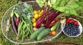Harvesting and Vegetable Storage