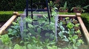 How to Grow vegetables up an Obelisk