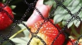 How to Protect Your Plants with Garden Netting