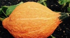 Kitchen Garden Blog - the Autumn Harvest continues