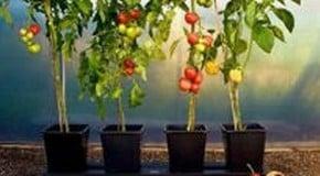 Quadgrow Growing System