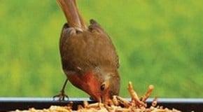Sale Now On on Bird Food