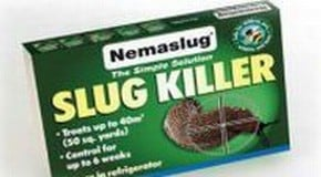 This week we are applying Nemaslug