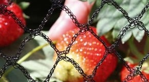 Top 10 Garden Netting Tips