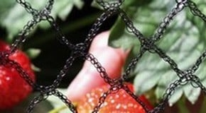 Top 10 Garden Netting Tips