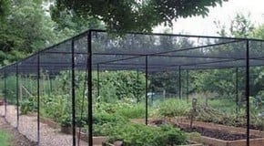 Top 10 Reasons to Buy a Fruit Cage