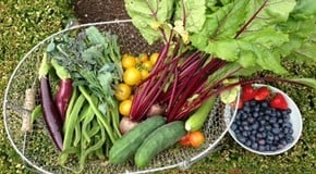 Weekly Kitchen Garden Blog - Harvest is booming