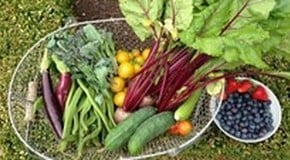Weekly Kitchen Garden Blog - Harvest is booming