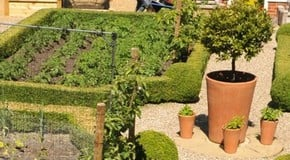 Weekly Kitchen Garden Blog - keeping fed and watered