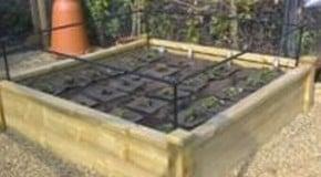 Weekly Kitchen Garden Blog - Planting Strawberries