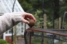 Harrod Vintage Fruit & Vegetable Cage 1.5m High - Natural Rust