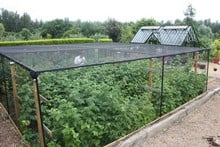 Steel Fruit Cage with Butterfly Net