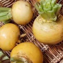 Autumn - Turnip Golden Ball