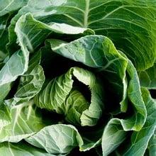 Autumn - Winter Green Cabbage (10 Plants)
