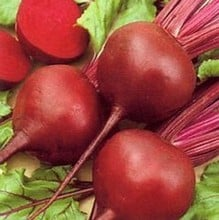 Beetroot Detroit (10 Plants) Organic