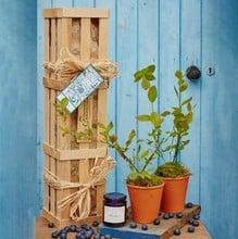 Blueberry Plants and Jam Gardeners Gift Set