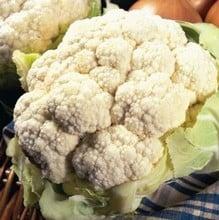 Cauliflower All Year Round (10 plants) Organic