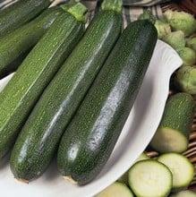 Courgette Green Bush (5 plants) Organic