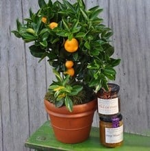Extra Orange Gardeners Gift Set