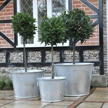 Galvanised Zinc Planters