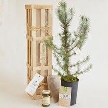 Grow Your Own Pesto Gardeners Gift Set