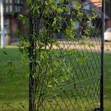 Harrod Ellipse Garden Screens
