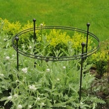 Harrod Short Circular Plant Support - Matt Black