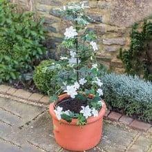 Harrod Spiral Plant Obelisk