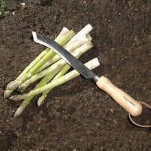 Harvesting and Asparagus Knife