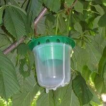 Horse Chestnut Leaf Miner Trap