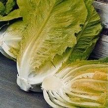Lettuce Little Gem (10 Plants) Organic