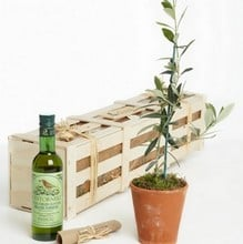 Olive Tree and Oil Gardeners Gift Set
