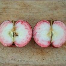 Organic Red Devil Apple Trees
