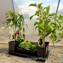 Quadgrow Plus Vegetable Planter