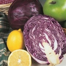 Red Cabbage Red Drumhead (10 Plants) Organic