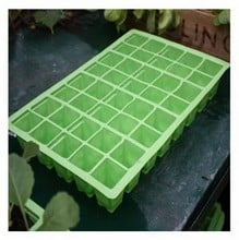 Seed Tray Growing