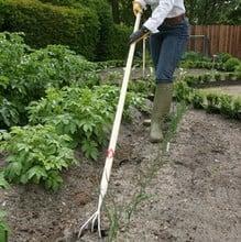 Sneeboer 3 tine long handled cultivator
