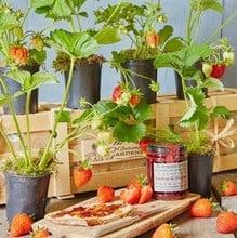 Strawberry Bed Gardeners Gift Set
