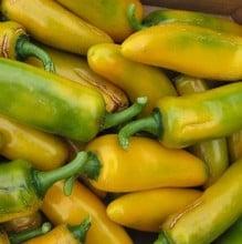 Sweet Pepper Long Yellow Ringo (3 Plants) Organic
