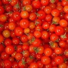 Sweetie Tomato (5 Plants) Organic