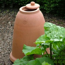 Terracotta Rhubarb Forcer (47cm H)