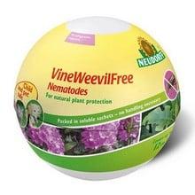 VineWeevilFree Nematodes