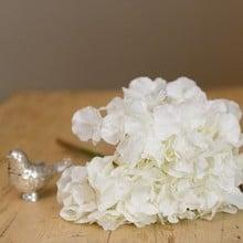 White Hydrangea Stem by Sia