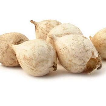 Anti Mole Bulbs