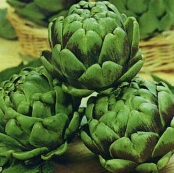 Artichokes Green Globe (5 plants) Organic