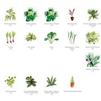 Autumn Small Vegetable Patch (155) plants
