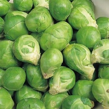 Brussels Sprouts - Evesham Special (10 plants) Organic