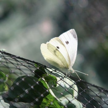 Butterfly Netting Rigid Plastic Mesh