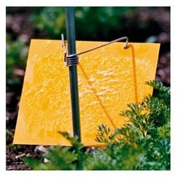 Carrot Root Fly Trap Refills Only