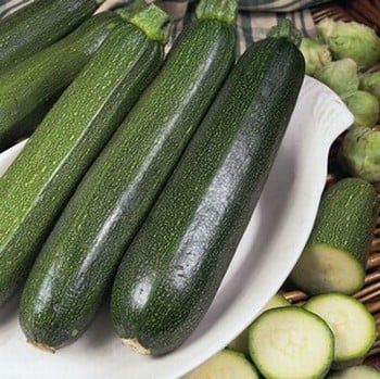 Courgette Green Bush (5 plants) Organic